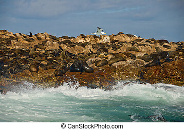 island/geyser, afrique, cap, rocher, occidental, cachet, sud...