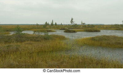 Islands in the swamp. Autumn daytime. Smooth dolly shot