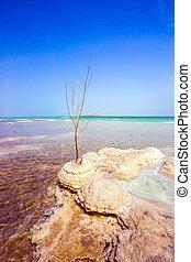 Islands of salt in the lake