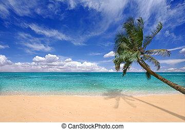 islas, aguas, cerceta, hawaiano