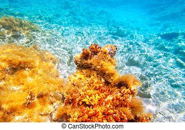 islas, baearic, submarino, mar, fondo