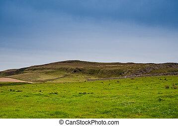Islay field - Field on the isle of Islay, Scotland