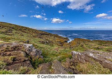 Isle of May landscape