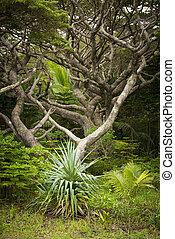 Isle of Pines Rainforest