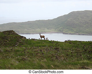 isle of skye wildlife