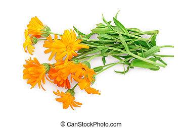 isolé, arrière-plan orange, blanc, bouquet, fleurs, calendula