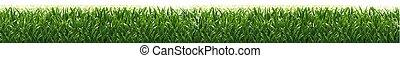 isolé, arrière-plan vert, blanc, herbe, frontière