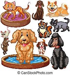 isolé, ensemble, chiens, chats