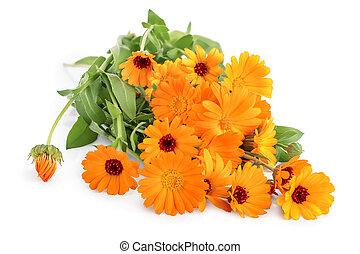 isolé, fond blanc, fleurs, calendula, buissons, orange