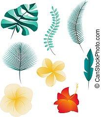 isolé, fond, ensemble, exotique, blanc, feuilles, fleurs
