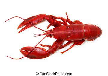 isolé, homard, fond, blanc, entier, rouges