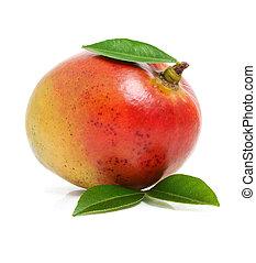 isolé, mangue, fruit, vert, pousse feuilles, frais