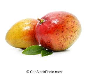 isolé, mangue, vert, pousse feuilles, fruits, frais