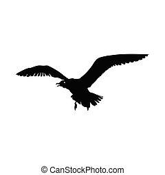 isolé, oiseau volant, blanc, mouette, arrière-plan., vecteur, illustration, noir, silhouette