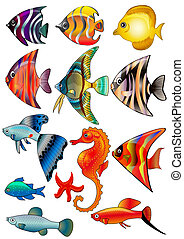 isolé, poisson blanc, fond, kit