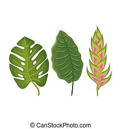 isolé, pousse feuilles, heliconia, fleur, icône