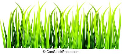 isolé, vecteur, arrière-plan vert, blanc, herbe