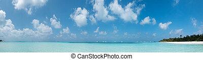 isola, alberi., panorama., spiaggia, maldive, meeru, idilliaco, palma