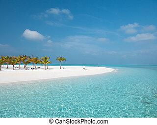 isola, alberi., spiaggia, maldive, meeru, idilliaco, palma