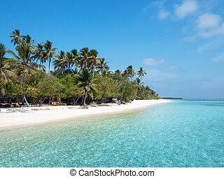 isola, alberi., spiaggia, maldive, meeru, palma