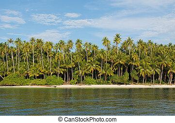 isola, -, albero, tropicale, palma, mare, cielo