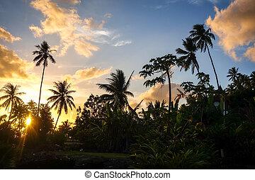 isola, palma, tramonto, moorea
