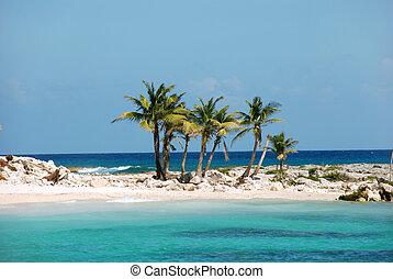 isola, palme noce cocco