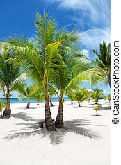 isola, palmizi, paradiso