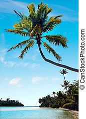 isola, piede, aitutaki, laguna, cucini isole, paesaggio
