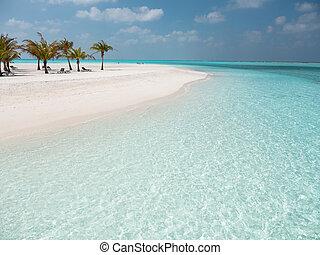 isola, spiaggia, albero, maldive, meeru, idilliaco, palma