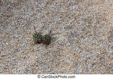 isola, spiaggia sabbia, fondo