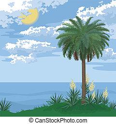 isola tropicale, fiori, palma