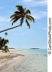 isola tropicale, noce di cocco, abbandonato, albero