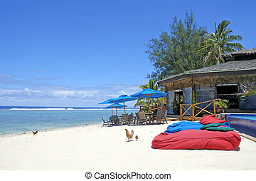isola tropicale, polli, vuoto, camminare