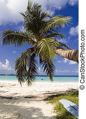 isola tropicale, spiaggia