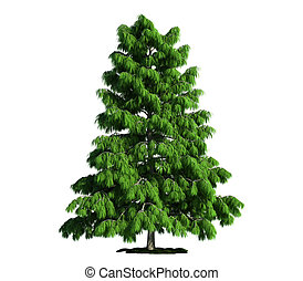 isolado, árvore, branco, cedro, (cedrus, deodara)