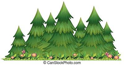 isolado, branca, jardim, fundo, natureza
