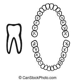isolado, branca, números, dente