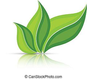 isolado, folhas, branca, reflexão, três