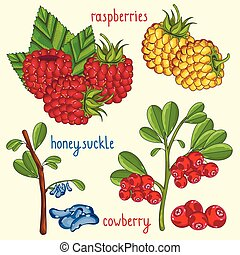 isolado, fruta, mistura, vetorial, ilustração, fresco