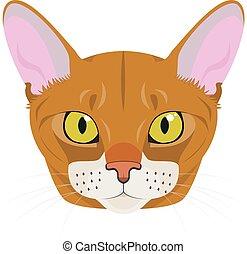 isolado, ilustração, gato, vetorial, fundo, abyssinian, branca