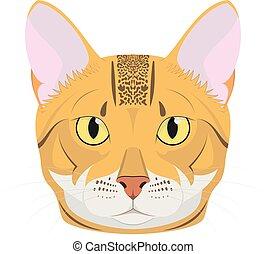 isolado, ilustração, gato, vetorial, fundo, branca, bengal