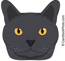 isolado, ilustração, gato, vetorial, fundo, branca, chartreux