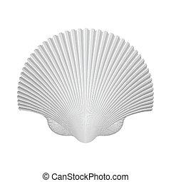 isolado, ilustração, vieira, vetorial, white., shell.