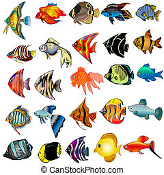 isolado, peixe branco, fundo, equipamento