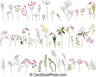 isolado, stylized, ervas, colection, flores brancas, floresta