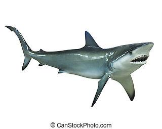 isolado, tubarão