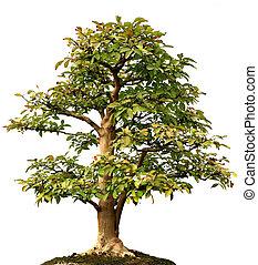 Isolate Lone Tree