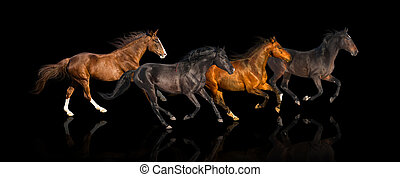 isolate of four galloping horse on the black background