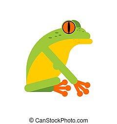 isolated., 樹青蛙, 熱帶, 矢量, 兩棲動物, 插圖